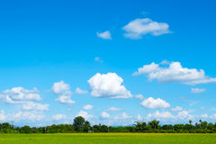 Green grass field and bright blue sky Royalty Free Stock Images
