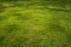 Green grass field with brown texture.  Royalty Free Stock Photo