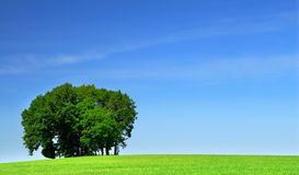 Green grass field and a bunch of trees #2 Royalty Free Stock Photos