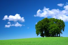 Green grass field and a bunch of trees Royalty Free Stock Images