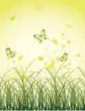 Green grass field with butterflies Stock Photo