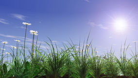 Green grass field with camomile. 3D Royalty Free Stock Photography