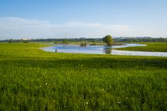 Green  grass field and city far off. Focus on the foreground!!! Shallow DOF!!! Royalty Free Stock Image