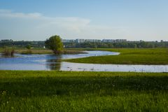Green  grass field and city far off. Focus on the foreground!!! Shallow DOF!!! Royalty Free Stock Photography