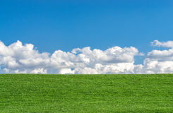 Green grass field with clear blue sky and white clouds Royalty Free Stock Image