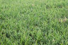 Green Grass Field Stock Images