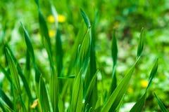 Green grass field Stock Photos