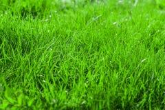 Green grass field Stock Photography