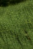 Green grass in the field Stock Photos