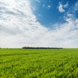 Green grass field and clouds in blue sky. Agricultural green grass field and clouds in blue sky Stock Image