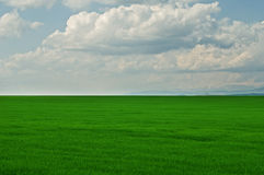 Green grass field with cloudy blue sky Royalty Free Stock Images