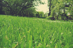 Green grass field in the countryside in spring; low angle tilted view; retro style Stock Photos