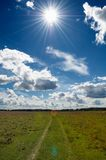 Green Grass Field in Countryside Under Midday Sun  Stock Photos