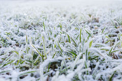 Green grass field covered with frost. Stock Photo