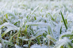 Green grass field covered with frost. Royalty Free Stock Photos