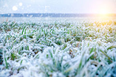 Green grass field covered with frost. Stock Image