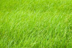 Green grass in field in daylight Stock Photo