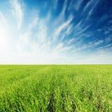 Green grass field and deep blue sky Stock Photos