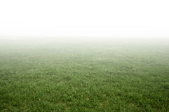 Green grass field. foggy landscape Royalty Free Stock Images