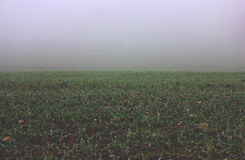 Green Grass Field on a Foggy Weather Stock Photos