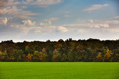 Green grass field and a forest on the horizon Stock Photography