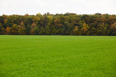 Green grass field and a forest on the horizon Royalty Free Stock Photo
