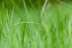 Green grass in the field Stock Images