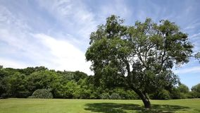 Green grass field and fresh tree. Public park with green grass field and green fresh tree plant stock video footage