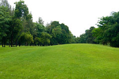 Green grass field in garden Royalty Free Stock Images