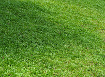 Green Grass field in garden. Green Grass field in garden Royalty Free Stock Images