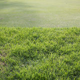 Green grass field of golf course. Sport background stock images