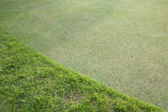 Green grass field of golf course. Sport background stock photography