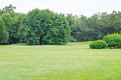 Green grass field and green fresh tree Royalty Free Stock Photography