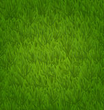 Green grass field, herb texture Stock Image