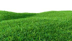 Green grass field isolated on white background Royalty Free Stock Photography