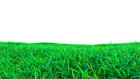 Green grass field isolated on white background Royalty Free Stock Images