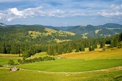 Green grass field landscape Stock Photography
