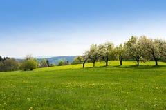 Green grass field landscape Royalty Free Stock Photo