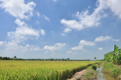 Green Grass Field Landscape. With fantastic clouds in the background,Thailand Stock Photography