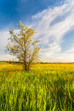 Green Grass Field. Landscape Royalty Free Stock Photos