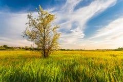 Green Grass Field  Landscape Stock Photos