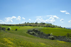 Green Grass Field Landscape with fantastic clouds stock photo