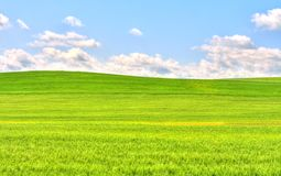 Green grass field landscape under blue sky. With clouds in the background Royalty Free Stock Images