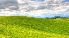 Green grass field landscape under blue sky in spring. With clouds in the background Royalty Free Stock Images