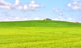 Green grass field landscape under blue sky in spring. With rural house in the background Royalty Free Stock Photo