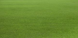 Green grass field, green lawn. Green grass for golf course, soccer, football, sport. Green turf grass texture and background for d