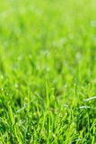 Green grass field or lawn. Summer background with copy space. Selective focus. Natural sunlight stock photography