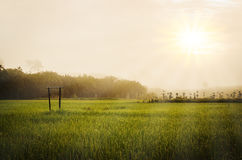 Green grass field with morning sky Stock Image