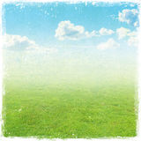 Green grass field , nature background stock photography