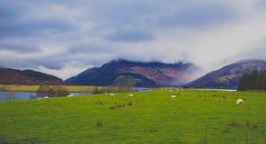 Green Grass Field Near Body of Water Stock Photo